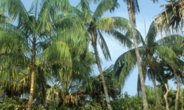 Chuyện cây cỏ và địa danh